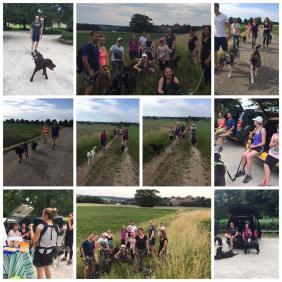 Dog Trekking, Dog Hiking, Wandern